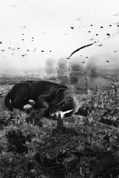 a dog in a war zone