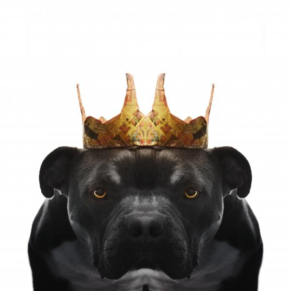 a dog wearing a paper crown