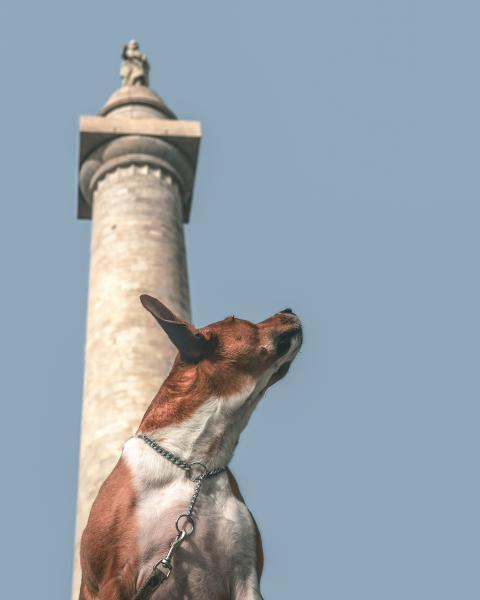 A rescued dog in front of Baltimore's Washington Monument