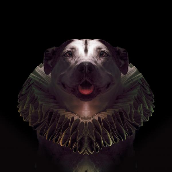 a chubby dog wearing a paper Elizabethan style ruff collar