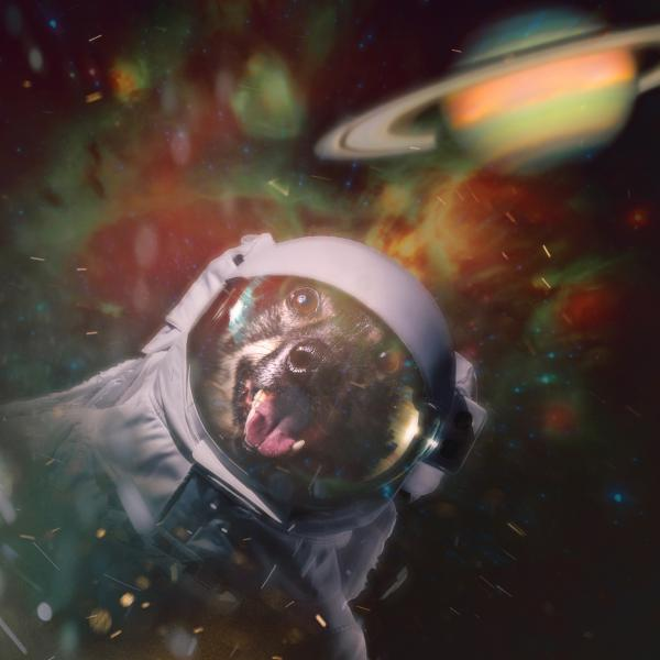 a dog in a space suit