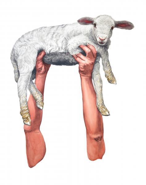 ponemone food watercolor lamb