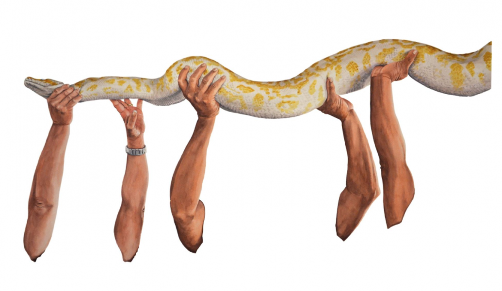 Ponemone watercolor python scales