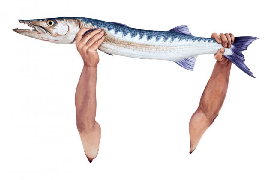 Ponemone watercolor scales barracuda