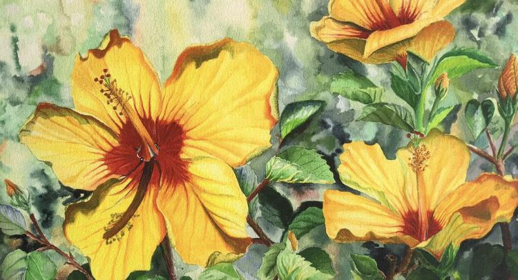 watercolor, realism, floral, hibiscus