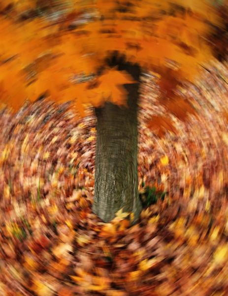 Autumn Vortex abstract maple tree leaf leaves circle long exposure Westminster Maryland Carroll County