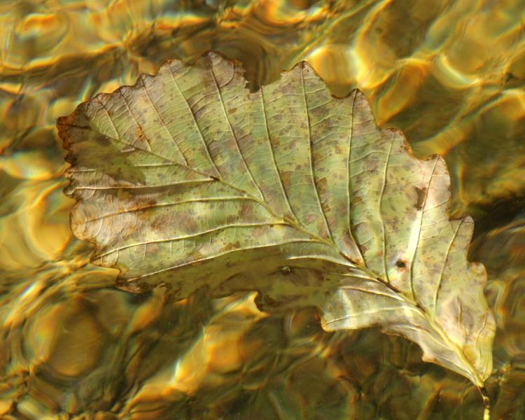 Fan fall autumn leaf leaves abstract red Morgan Run Creek Carroll County Westminster