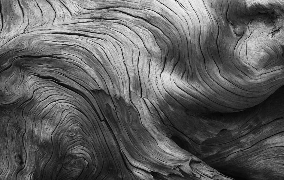 Driftwood wood black white Acadia National Park Maine Bar Harbor patterns abstract Little Hunters Beach
