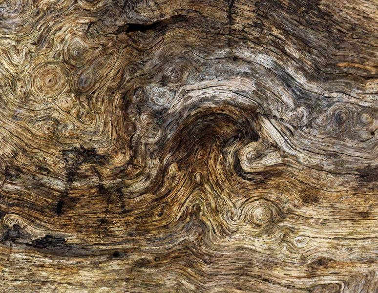 Vincent Was Here Van Gogh Starry Night Abstract Wood Tree Trunk