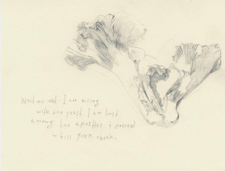 Chanterelle with poem drawn in pencil.