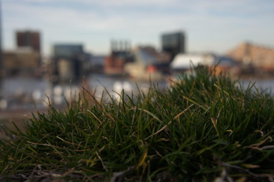 a photograph of grass (close up) with a blurry view of the sky and building and water taken by Jennifer N. Shannon