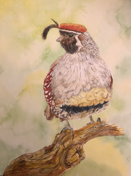 Watercolor painting of a quail in a natural setting