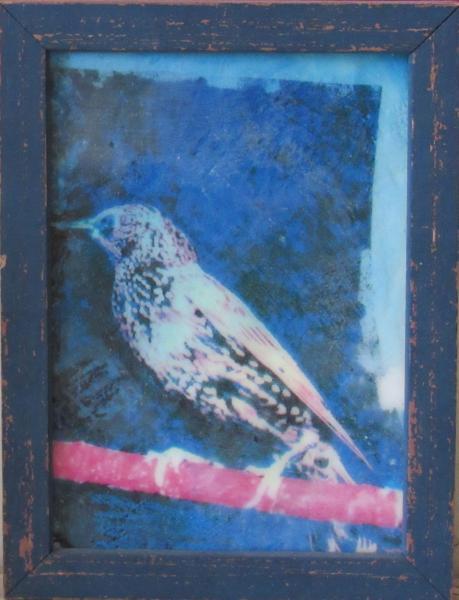 starling, encaustic