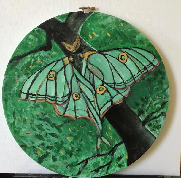 painting, round, insect, luna moth