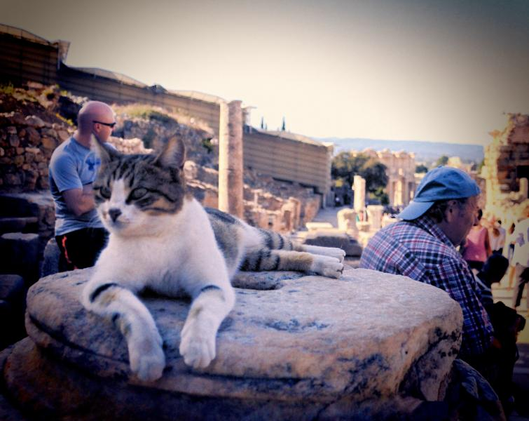 A Cat on Guard at Ephesus