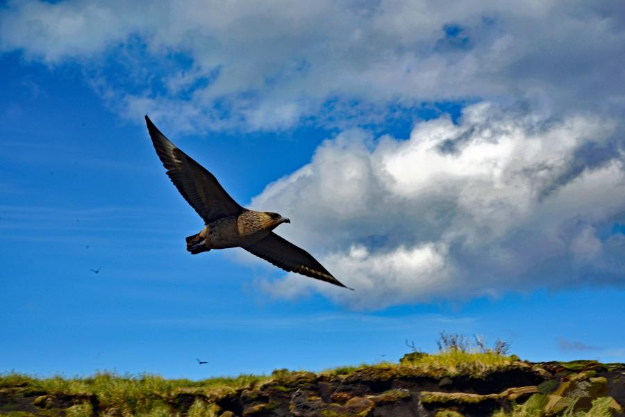 The Condor in Flight, Chile