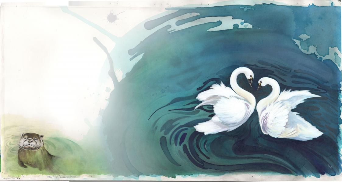 two arctic swans swimming together