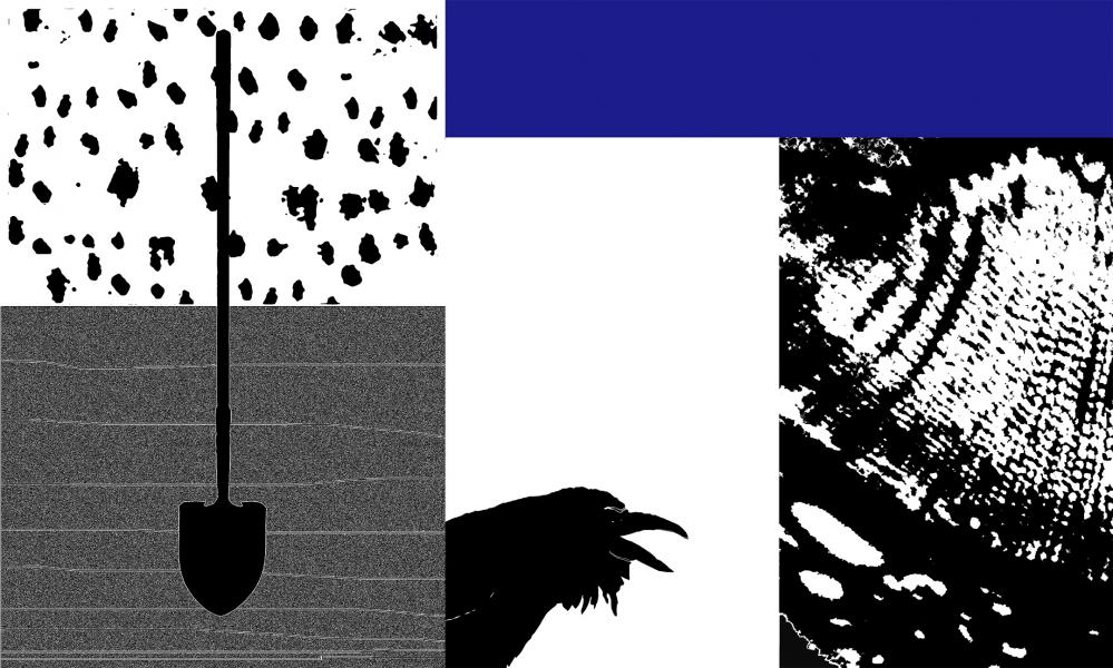 Collage of charcoal drawing of shovel,  oil painting of raven, magnified oak leaf ( top lef), magnified onion skin( far right),collaged and computer manipulated