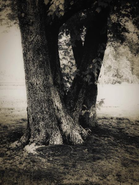 #patriciaomaille #photography #Trees