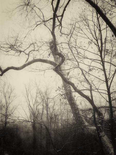 #patriciao'maille #photography #atmosphericphotography