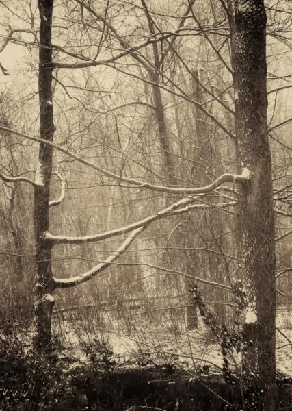 #patriciao'maille #photography #Trees #winter