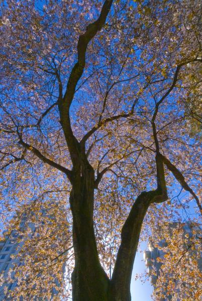 InBetween Tree