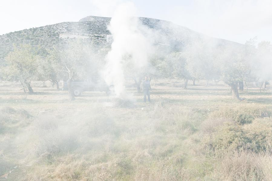 Smoke in the Olive Grove (Burning Branches)