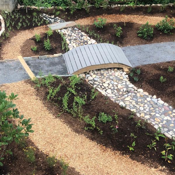 sustainability, rain garden