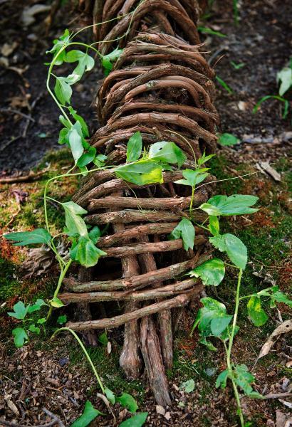 passionflower, vines, native plants