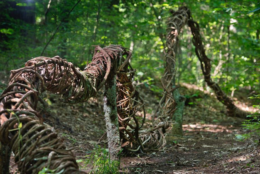 native plants, vines, non-native, earth art, land art, environmental art,