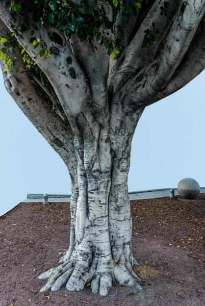 Totem (Tree, Angeles)