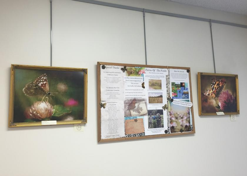 Installation View: Fairies of the Fields Information Board