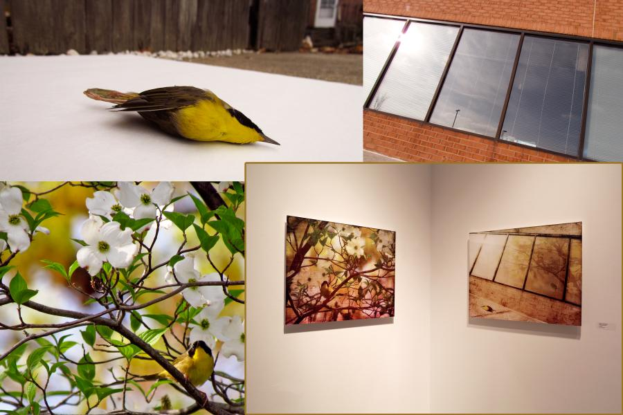 The photo elements used to make Yellowthroat Slain