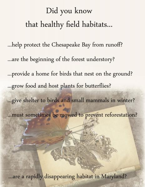 Fairies of the Fields Information Board - Did you know?