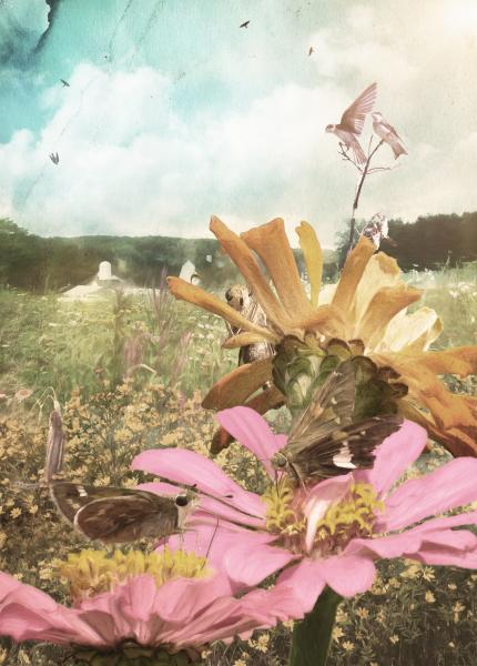At the Flower Farm, Photography and Photo Illustration by Rose Anderson