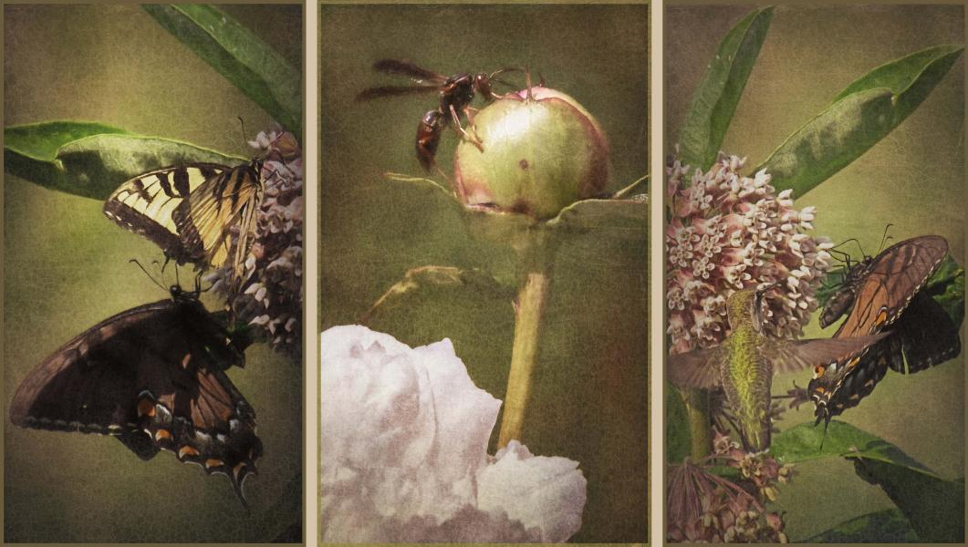 Fairies of the Fields: Triptych, by Rose Anderson, Artist