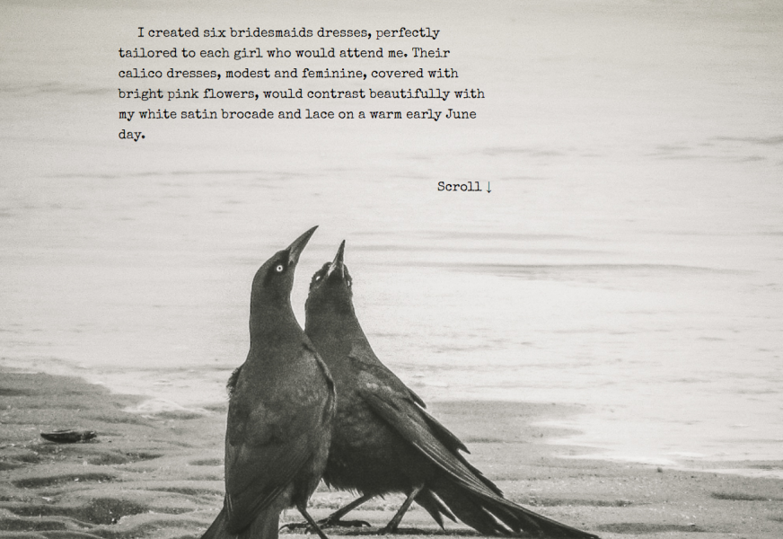 "Screenshot: Photo of two grackles in a mating dance, placed in my Scroll ""A Thing of Transcendent Beauty""."