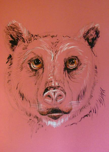 Bear, pink, Bear, golden eyes
