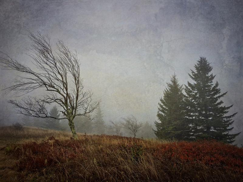 Fog, Dolly Sods