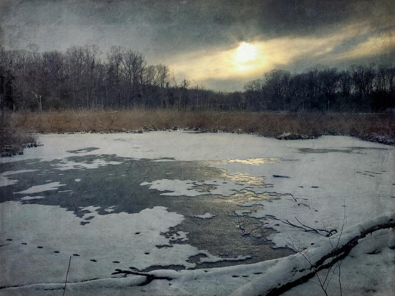 Winter Marsh