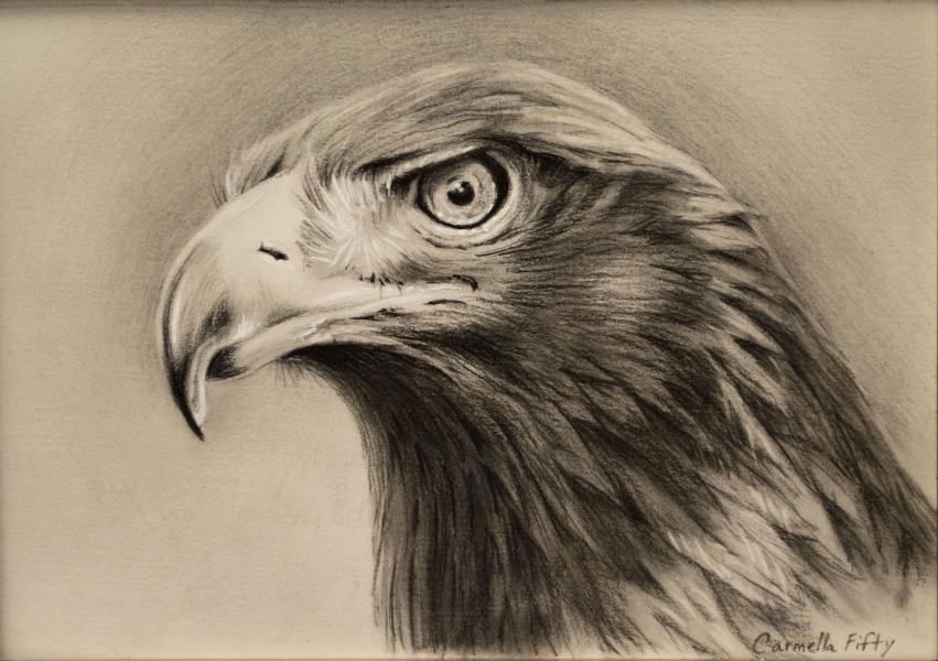 "Drawing of a bald eagle's head in carbon pencil on ledger paper. It is 5"" x 7""."