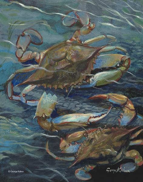 Blue Crabs, Middle River, Chesapeake Bay