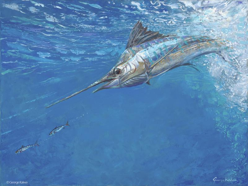 Sailfish chasing sardines
