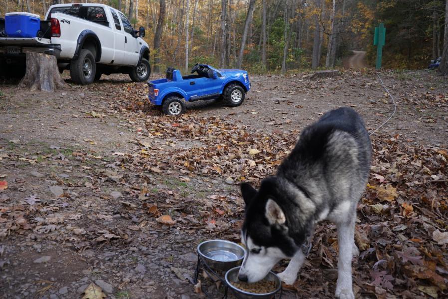 Dog and Trucks