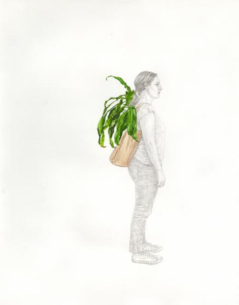 "Portable Plant Study #3 (Dracaena fragrans ""Massangeana"")"