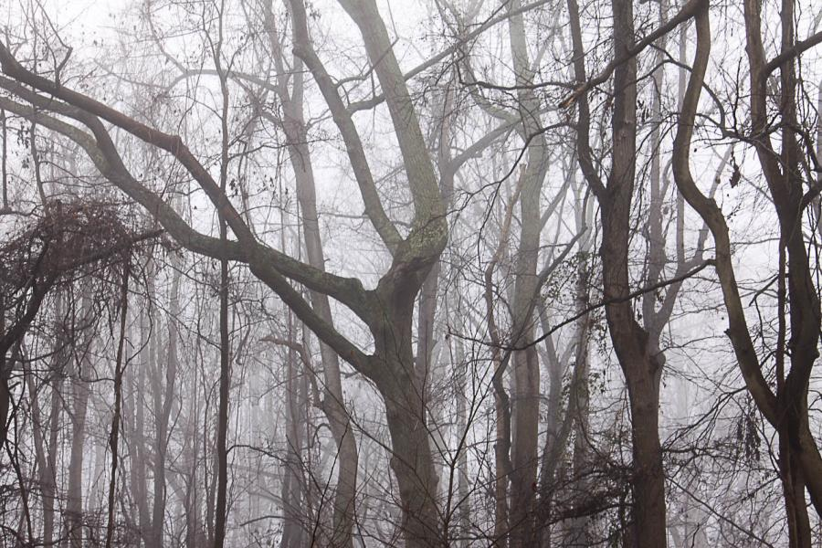 Fog transforms the forest, typically full of bird and animal life, into a still and silent place.