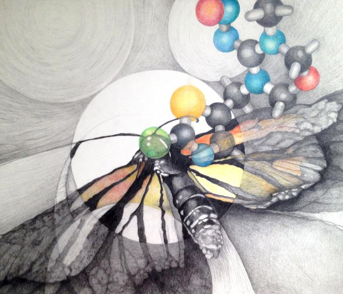Drawing of a dead bird and a Neonicotinoid molecule.