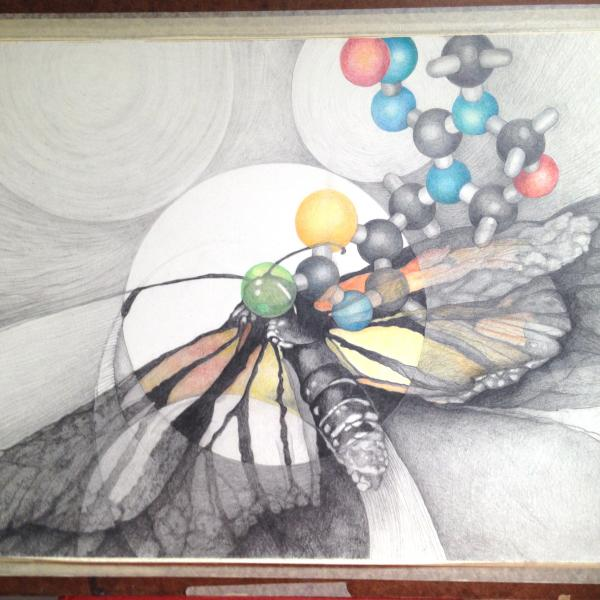 Drawing of a dead Monarch butterfly and a Neonicotinoid molecule.