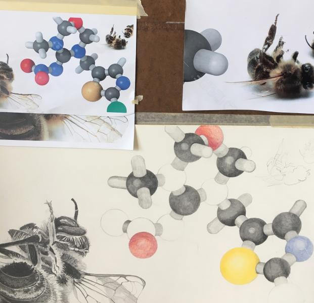 Dead Bees and Neonicotinoid Molecule (In Progress)