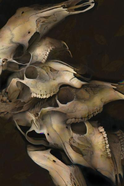 Collage of scanned deer skull images.